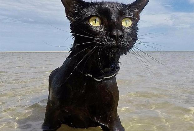 На другом конце Земли, в Австралии, наоборот, весна в самом разгаре. Светит солнце, поют птицы, а в океане плещется кошка по имени Нейтан, опровергая стереотипы о нелюбви этих животных к воде. Хозяева Нейтан забрали ее из приюта около года назад. Они регулярно выводили кошку на прогулки к океану, и каждый раз любопытный питомец все ближе и ближе подходил к кромке воды. Однажды Нейтан поплыла, и с тех пор иногда так увлекается купанием, что даже не хочет вылезать на сушу. Гордые хозяева зовут Нейтан «пляжной кошкой».