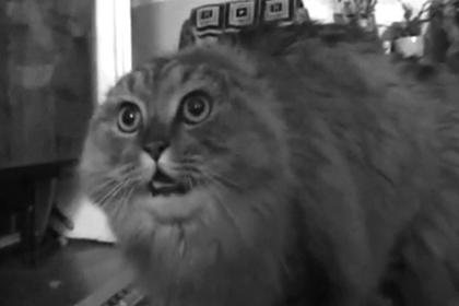 Скончался знаменитый кот-мем