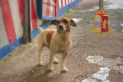 Итальянская мафия объявила награду за голову полицейской собаки