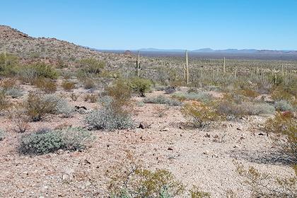 Женщина шесть дней искала людей и ела траву после аварии в пустыне