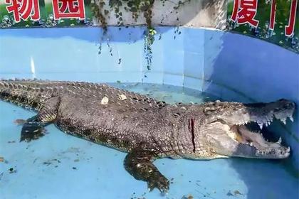 Посетители зоопарка закидали медленного крокодила камнями