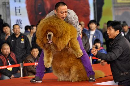 В Китае ввели комендантский час для собак