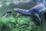 Морской леопард в Антарктиде попал в лагуну незадолго до отлива и подстерег пингвина. Он действовал очень быстро: ухватил его за ласты и тащил в открытую воду. Пингвин оказывал сопротивление и вырвался. Но тюлень продолжил преследование и с третьей попытки его одолел. После долгой борьбы пингвин задохнулся, а морской леопард поужинал.