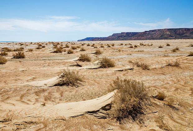 Часть Аралкума представляет собой песчаную пустыню с редким кустарником и перекати-полем.