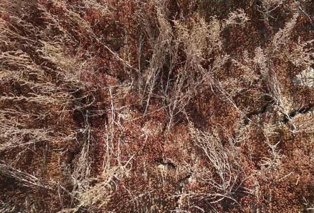 Несмотря на то что бывшее дно моря покрыто соляными отложениями и пестицидами, которые в море годами приносили с полей Сырдарья и Амударья, жизнь находит себе путь и в таких условиях.