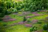 Заросли иван-чая показывают места бывших поселений. Тверская область. Скорее всего, на месте цветущих растений раньше была деревня.