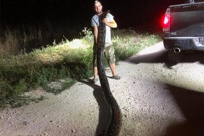 Охотник в одиночку убил самого длинного питона Флориды