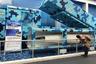 Экспортный мобильный наземный противокорабельный комплекс CM-401 получил одноименную ракету дальностью от 15 до 290 километров и скоростью до 6 чисел Маха. Считается, что заявленные возможности комплекса занижены, поскольку дальность ракеты CM-401 может превосходить 500 километров. Оружие по своим тактико-техническим характеристикам напоминает отдельные образцы семейства российских оперативно-тактических комплексов «Искандер». Готовность Китая продавать оружие, способное поражать корабли авианосной ударной группы, вызывает озабоченность в США.