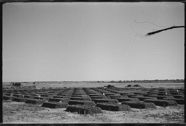 Военное немецкое кладбище со свежими могилами. Польша, 1942-1943 годы.
