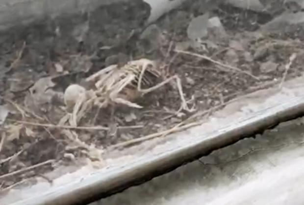 Скелет воробья в оконной раме в одной из отремонтированных операционных института хирургии им. Вишневского