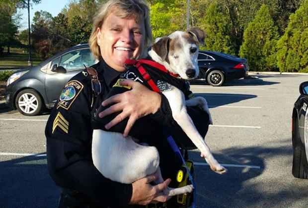 Джек в форме полицейской собаки