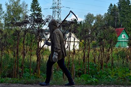 Власти Подмосковья рассказали о борьбе с борщевиком