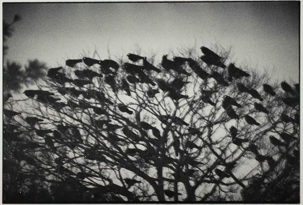 Серия «Вороны» (множественное от «ворон», а не «ворона») в оригинале называется «Одиночество ворона» — и именно эти монохромные, мрачные снимки завоевали Фукасэ репутацию радикального фотографа.