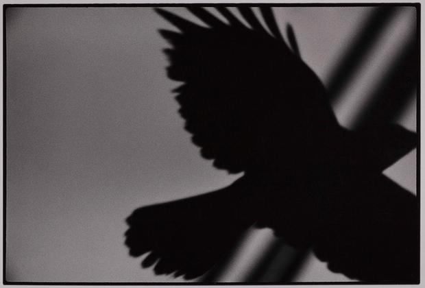 Фукасэ использовал птицу как метафору своего одиночества. Позже, в 1982 году, он даже говорил, что сам «стал вороном». Спустя несколько десятков лет альбом «Вороны» признали лучшей фотокнигой всех времен.