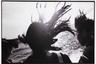Для фотографа серия символизировала отчаяние, в которое он впал после развода с женой. Ее звали Ёко, и с ней Фукасэ прожил 12 лет, посвятив ей большой альбом, названный ее именем.