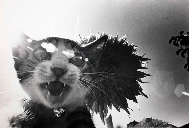 «Все 40 лет моей жизни вокруг меня все время мельтешил кот, преследуя меня, как тень», — говорил Фукасэ. В 1977 году он взял котенка, назвав его Саскэ в честь ниндзя-персонажа из манги.