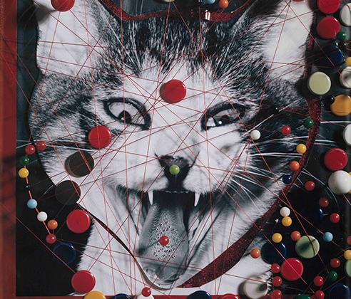 «Интересно, есть ли другой фотограф, который снял так же много зевающих котов, как я», — говорил Фукасэ. Несмотря на кажущееся однообразие кошачьих портретов, фотограф считал каждый жест достойным снимка — ведь он говорит об индивидуальности животного, которую он хотел раскрыть со всех сторон.