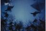В японской мифологии ворон — существо, несущее разрушение, предзнаменование беспокойных, тревожных времен. Фукасэ часто возвращался к знакомому мотиву в поздние годы своей слишком рано оборвавшейся карьеры.