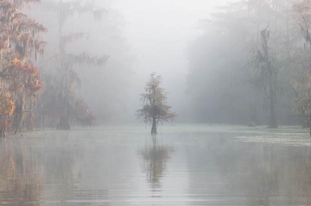 Роберто Маркеджиани снял этот мистический кадр, поставив камеру на длинную выдержку. Снимок был сделан на одном из заболоченных озер в штате Луизиана.