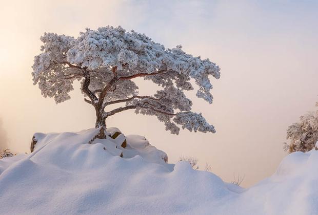 Победитель в абсолютном зачете среди фотографов-любителей Натаниэль Мерц из Южной Кореи. «Я влюбился в напоминающие бонсай сосны с тех пор, как я начал исследовать горы в Корее. Дерево на фото — одно из моих любимых из-за его высоты, благородной формы и того, что оно расположено на утесе. Оно красиво в любое время года, но особенно хорошо зимой, когда оно слегка припорошено снегом, как в то утро, когда я сделал этот кадр», — рассказал о снимке сам Мерц.