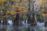 Заявленный в категории «Открытый пейзаж» снимок окутанных туманом деревьев был сделан Дэвидом Томпсоном на одном из болот юга США.