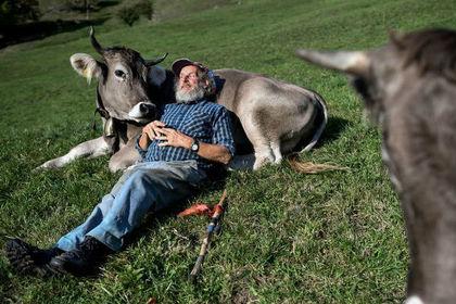 В Швейцарии провели референдум о коровьих рогах