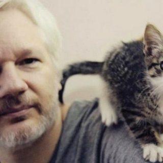 Джулиан Ассанж и его кот Мичи