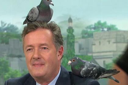 Голуби устроили хаос в студии телешоу и нагадили на стол ведущих