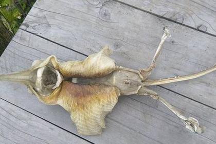 На берегу Новой Зеландии нашли останки загадочного существа