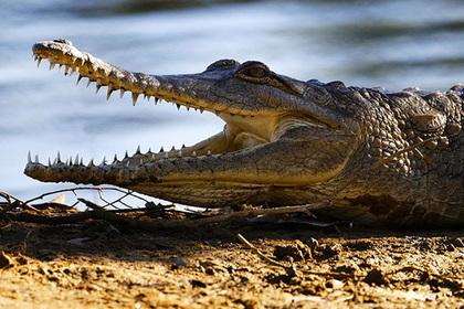 Толпа растерзала мужчину за «превращение» в крокодила и убийство девушки