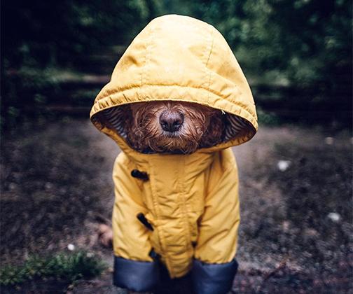Автор аккаунта @cockapoomarley, посвященного псу по кличке Марли, пишет: «Носик Марли, выглядывающий из-под чересчур большого капюшона, прекрасно передает, как я себя чувствую».