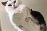 У Муцуми из Японии десять кошек: Маметийо, Карин, Маррон, Мелон, Фубуки, Торо, Микан, Монака, Юдзу и Кикухико. Все фотографии, которые она публикует в Instagram, посвящены их похождениям.