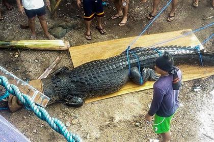 Пойман пятиметровый крокодил-людоед