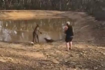 Австралиец стерпел пинки кенгуру и не выпустил пиво из рук