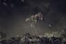 Ранним утром фотограф снял антилоп гну, пересекающих танзанийскую реку Мара. Наслаивание пыли, теней и Солнца на хаос, который тогда творился, придало картине ощущение мистики. «Это почти как старая картина — я все еще вынужден искать детали изображения, чтобы воспринять эту нереальную сцену», — признается автор снимка Пим Волкерс.