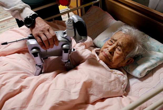 Йоичи Судзуки показывает своей прикованной к постели матери собаку-робота «Айбо». Робот, который «испытывает» эмоции в зависимости от ситуации, помог отцу Судзуки реабилитироваться после болезни.