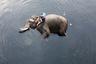 Погонщик слонов купает одного из них в грязных водах реки Ямуна в Нью-Дели, Индия.