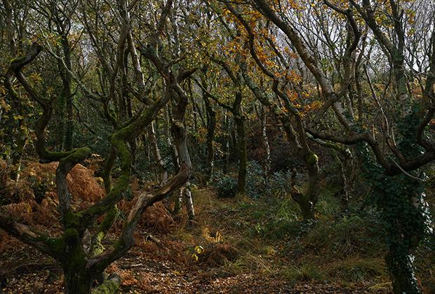 Таинственный лес по пути к Mudeford Sandbank