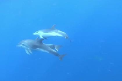 Дельфины прогнали акулу и спасли людей