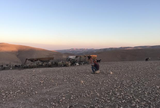 Пастухи — чаще всего молодые парни в фейковых кроссовках с лейблами известных брендов и спортивных костюмах. Некоторые из них приезжают к стаду верхом на лошади или на осле, а некоторые раскатывают по пустыне в старых полуразбитых авто. Овцы у арабов довольно худые и поджарые, поскольку их рацион — не свежие зеленые травы, как, скажем, у австралийских овец, а скудная местная растительность.