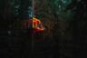 """Николай Белоусов – потомственный архитектор, создал «Проект ОБЛО», специализирующийся на деревянной архитектуре, и собственную производственную базу в Галиче; основал «Архитектурную мастерскую Белоусова». Он курирует проект <a href=""""http://re-wood.ru/"""" target=""""_blank"""">«Древолюция»</a> — практикум по современной деревянной архитектуре, участники которого проходят полный цикл создания объекта: осмысление; знакомство со средой; проектирование; защита проекта; получение разрешения на установку; подготовка спецификаций по материалам; строительство; защита установленных объектов перед жюри. Продюсирует проект Ольга Старкова.  <br> <br> В этом году «Древолюция» прошла в Лесном тереме Асташово в Костромской области. Темой практикума стало «укрытие, укрытие от бешеного темпа, от краткосрочности, от злых мыслей». Ранее «Древолюция» проходила в Петербурге в Таврическом саду, на территории парка Лесотехнической Академии и в загородном доме отдыха Суханово."""