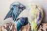 Птичьи перья кажутся красивыми лишь до тех пор, пока не увидишь, какие почти фантастические цветные пушинки прячутся за ними. «Скрытые цвета являются одними из самых интенсивных», — раскрывает секрет фотограф Рупа Суттон.