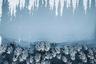 Высокие тени на снегу выглядят завораживающе. Фотографу удалось запечатлеть их, запустив съемочный дрон над кромкой зимнего леса.