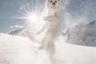 Пятилетний пес по кличке Раста обожает снег. К счастью, он живет с хозяйкой Сильвией в швейцарском Винтертуре, где сугробов сколько угодно. Они часто вместе ходят в походы в Альпы — оба без ума от горных просторов и разреженного воздуха на вершинах. «Раста и я? Мы просто хотим распространять радость и веселье, делать людей счастливыми, брать их с собой на наши прогулки и показывать им, как прекрасна может быть жизнь», — говорит Сильвия.
