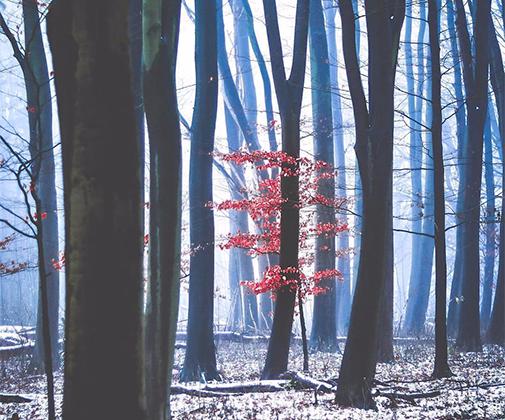 Поход за фотографиями первого снега в Амстердамский лес стал для Гленна Бланкера путешествием в сказку. «Мое сердце остановилось, когда опустился туман», — признался он.