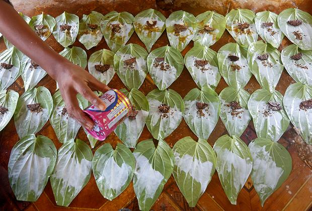 Продавец посыпает табачной пудрой листья бетеля —растения рода перец. Блюдо, также известное как кунья, очень популярно в Мьянме. Табачную пудру, орехи и лаймовую пасту заворачивают в листья бетеля. Эта закуска популярна в Азиатско-Тихоокеанском регионе, но запрещена во многих странах Запада из-за наркотического эффекта. Кроме того, от поедания куньи на зубах и губах остаются красные следы.