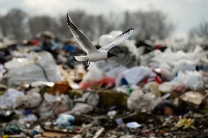 Россия захотела продавать мусор Европе