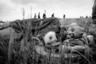 Алексей познакомился с Георгием Колосовым на одном из крестных ходов в начале 90-х. Георгий участвовал больше как паломник, чем фотограф. <br><br> От Колосова Мякишев многое узнал о духовной жизни и о фотографии. Когда крестный ход стал событием многолюдным и модным, Георгий участвовать в нем перестал, чтобы не жалеть об ушедшей из него душевности.