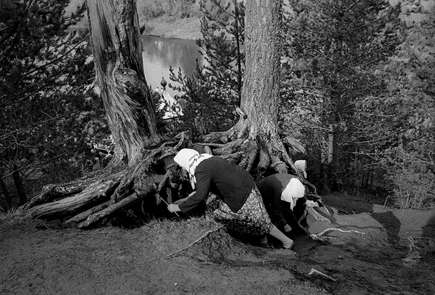 Фотограф уловил тонкую грань сочетания христианства и язычества в народном сознании. Этот снимок похож на иллюстрацию к сказке. Бабушки действуют ловко и энергично, совершая непонятный для окружающих ритуал. Корни деревьев, как узловатые лапы неведомого зверя, лесные ноги, на которые водрузили избушку Бабы-яги. <br><br> Чего ищут эти женщины? Может быть надеются, что утерянный церковью в 30-х годах прошлого века чудотворный образ вновь объявится там, где его увидели впервые?