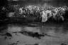 Крестный поход подразумевает преодоление трудностей, поэтому чем его условия сложнее, тем людям искренним и лучше. <br><br> «В прошлом году было очень тяжело. На следующий день, как крестный ход вышел, начались дожди, и они не прекращались. Грунтовые дороги размыло, пересекавшие путь ручьи превратились в полноводные реки», — рассказывает фотограф. <br><br> На одном из снимков видно такую реку, образовавшуюся из ручья. Переходом через нее до дождей служили бревна, но затем их затопило, и один из паломников нырнул в холодный поток, чтобы сделать переправу для остальных. В итоге использовали молодые поваленные деревья.